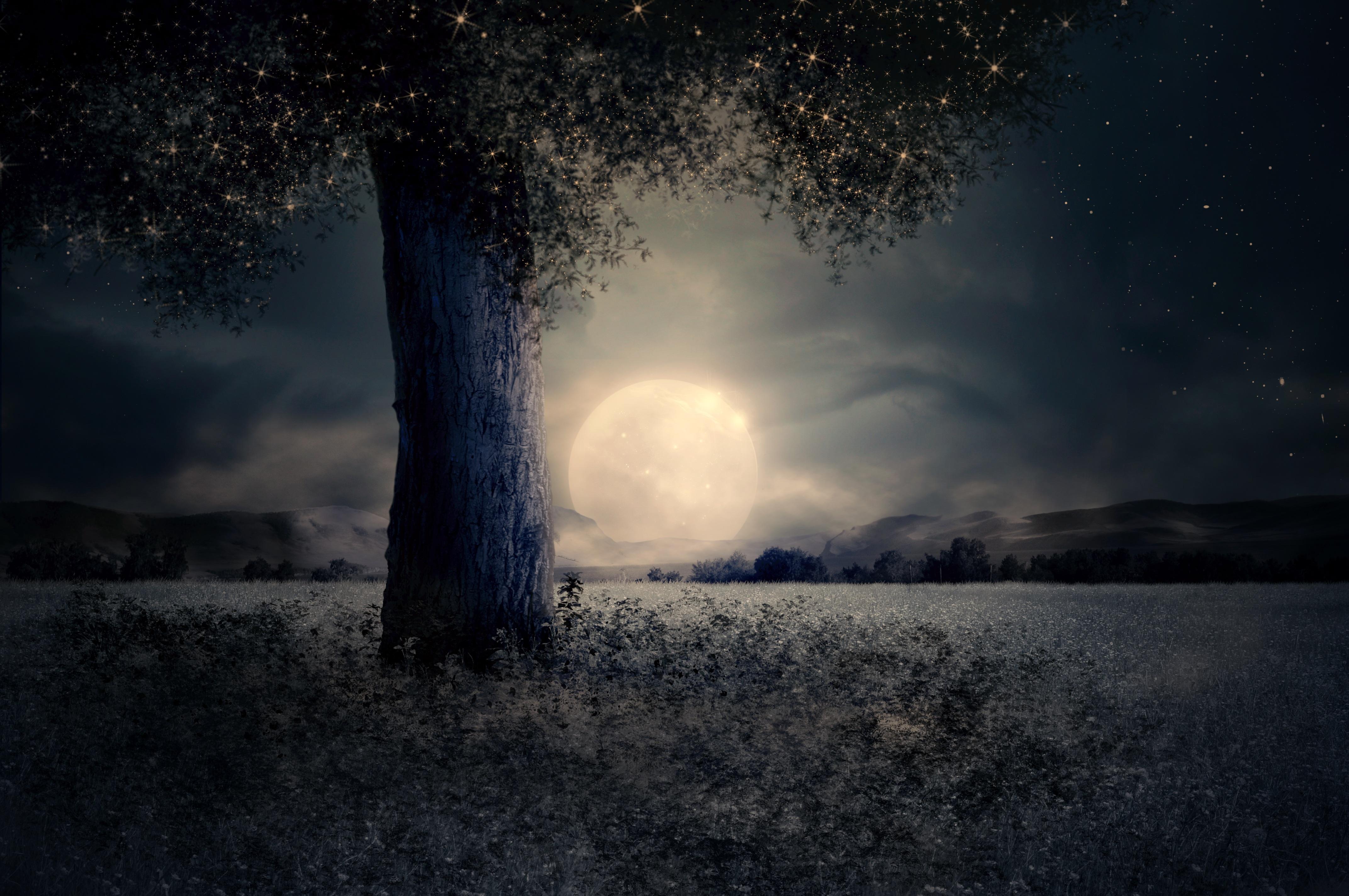 night-2539411